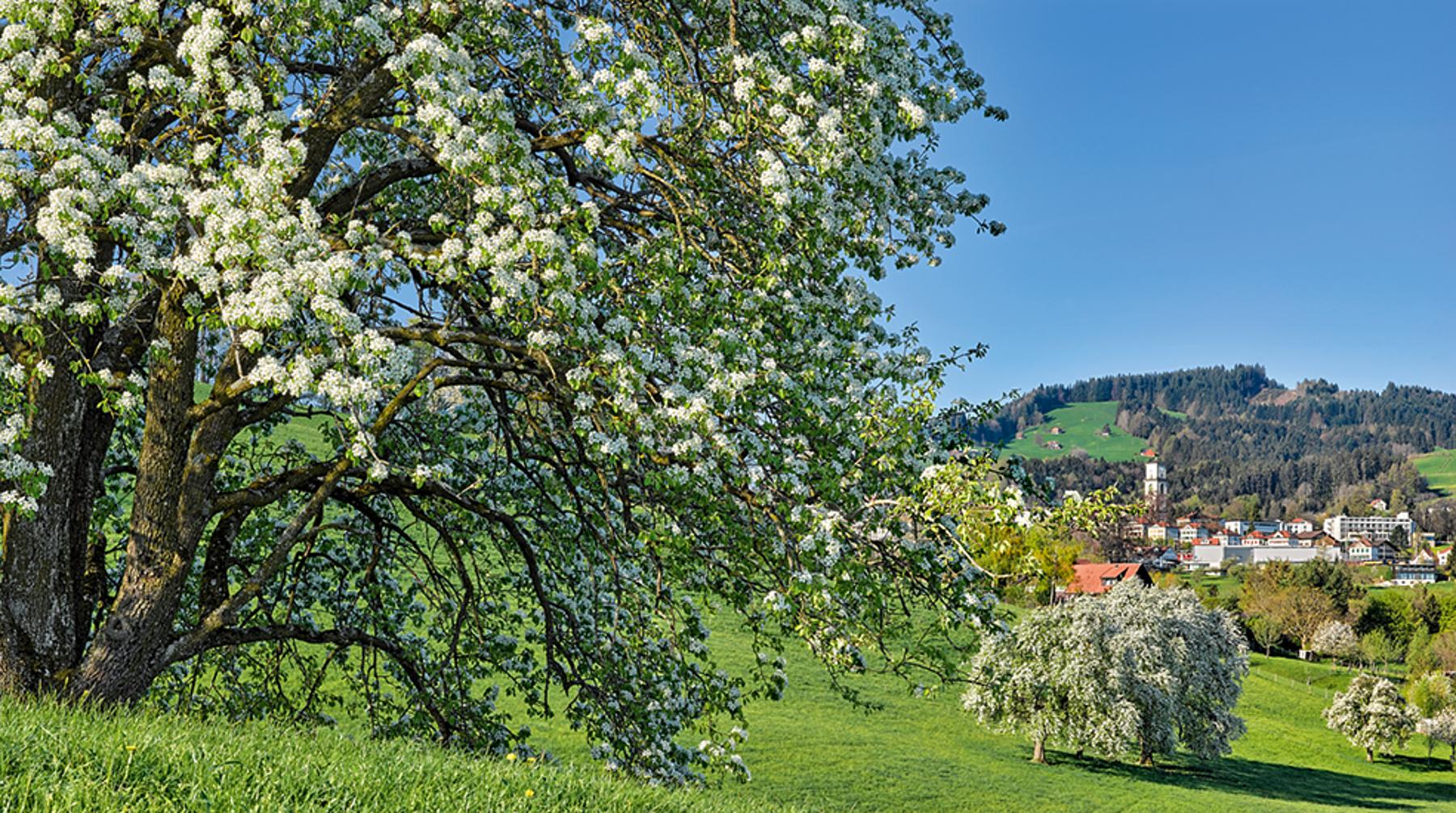 Panorama Appenzellerland 2019 April