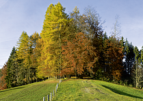Karte Herbstwald